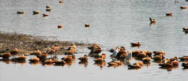 Assan-Barrage-Bird-Sanctuary