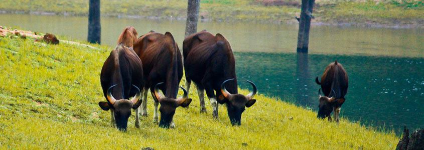 Radhanagari Wildlife Sanctuary