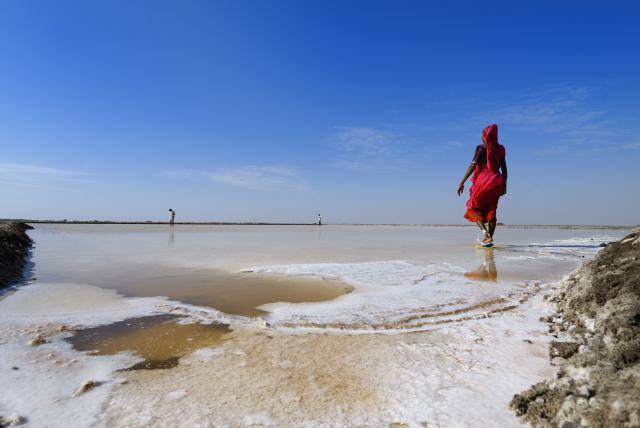India, Gujarat, tribes of the Kutch, the Little Rann of Kutch salty desert, People working in a local saltern