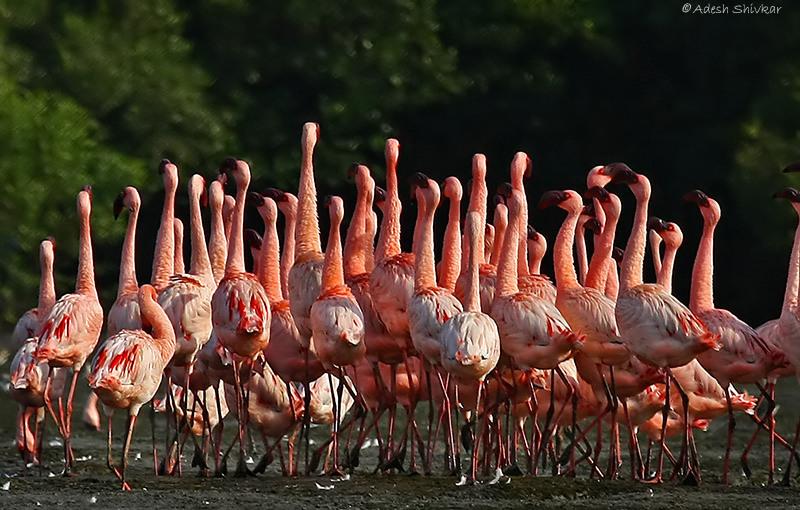 www.kolkatabirds