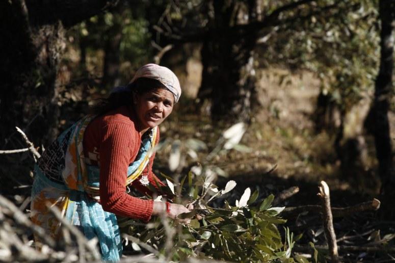 Image by Piyush Kumar, Owner Dunagiri Retreat