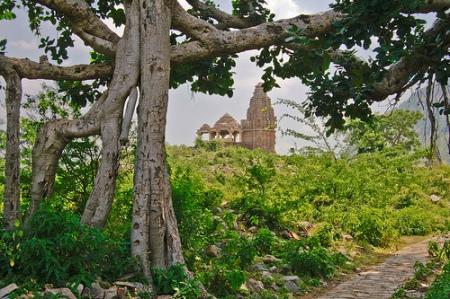 forest-bhangarh