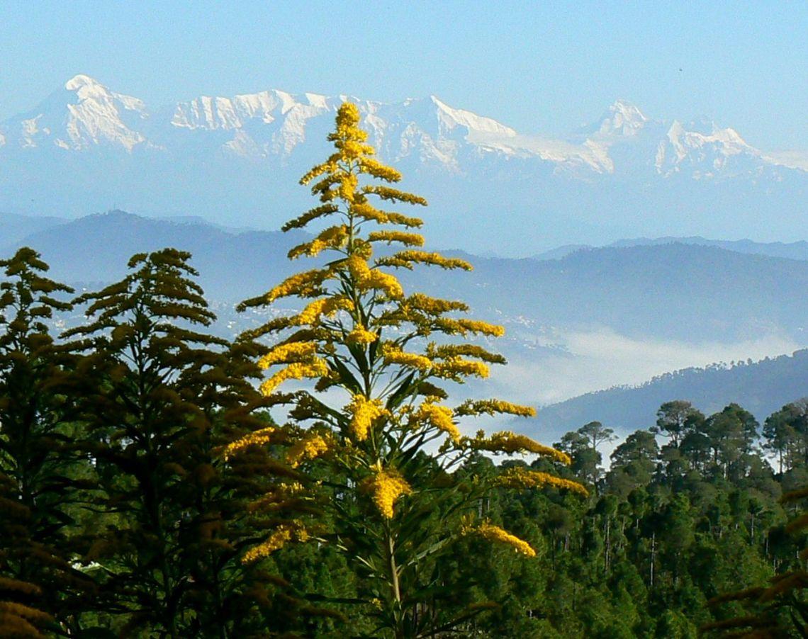 Nanda Devi Range as seen from The Himalayan Village, Sonapani, Image Courtesy @ Anil Walia-Flickr