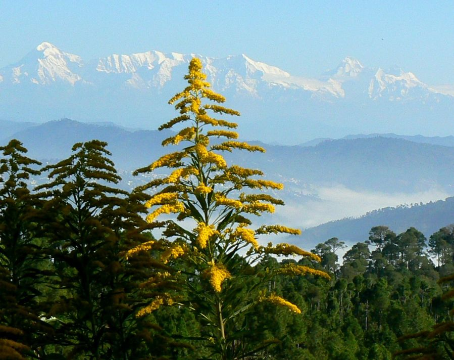 Nanda Devi Range as seen from The Himalayan Village, Sonapani, Image Courtesy @ Anil Walia-Flickr