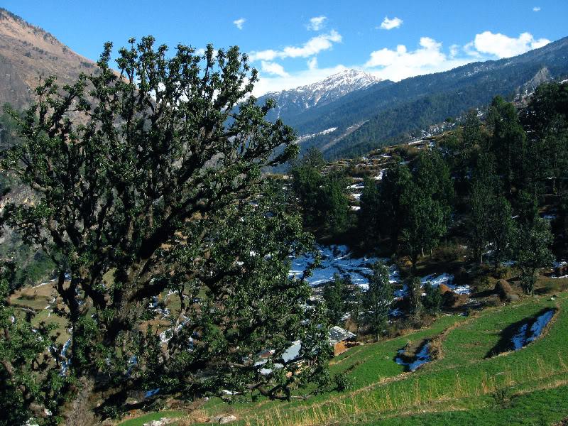 Sankri Village during Winters