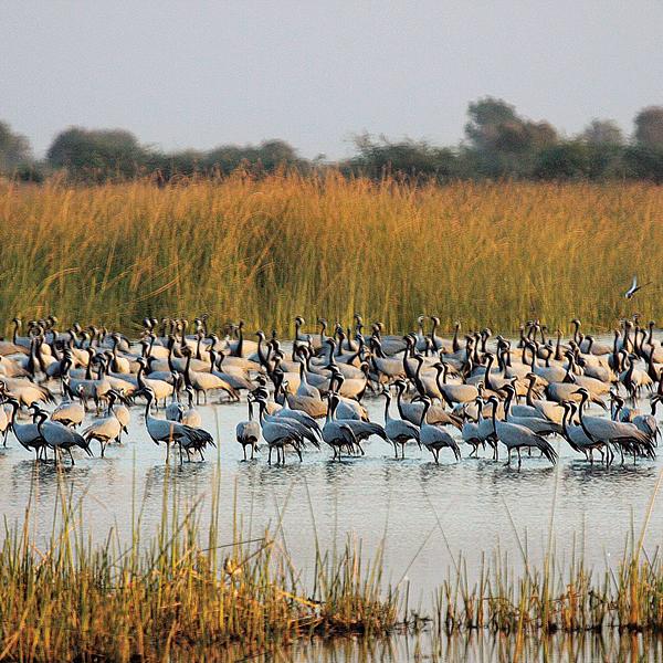 333669-wetland