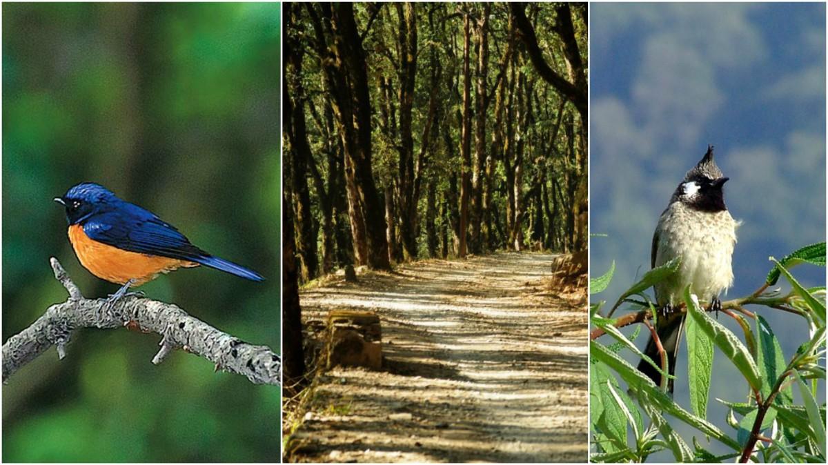 Mahesh Khan - a Bird Lover's Paradise