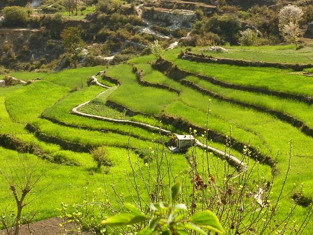 The Lush Green Fields of Kanda Village