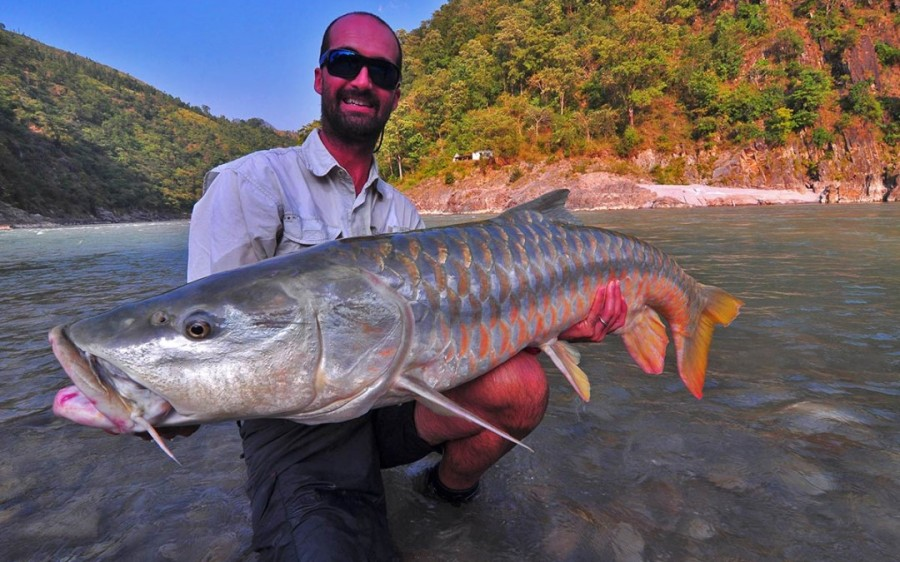 Golden-Mahseer caught in River Saryu