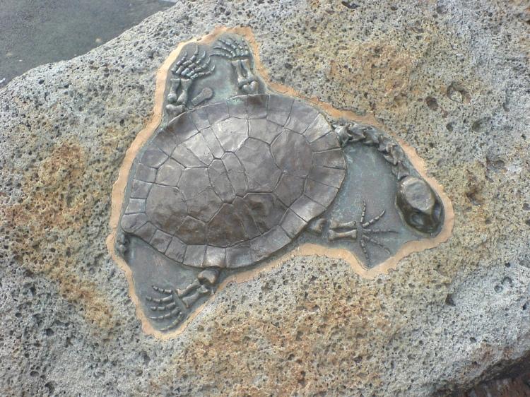 Pre-Historic Fossils, Nahan
