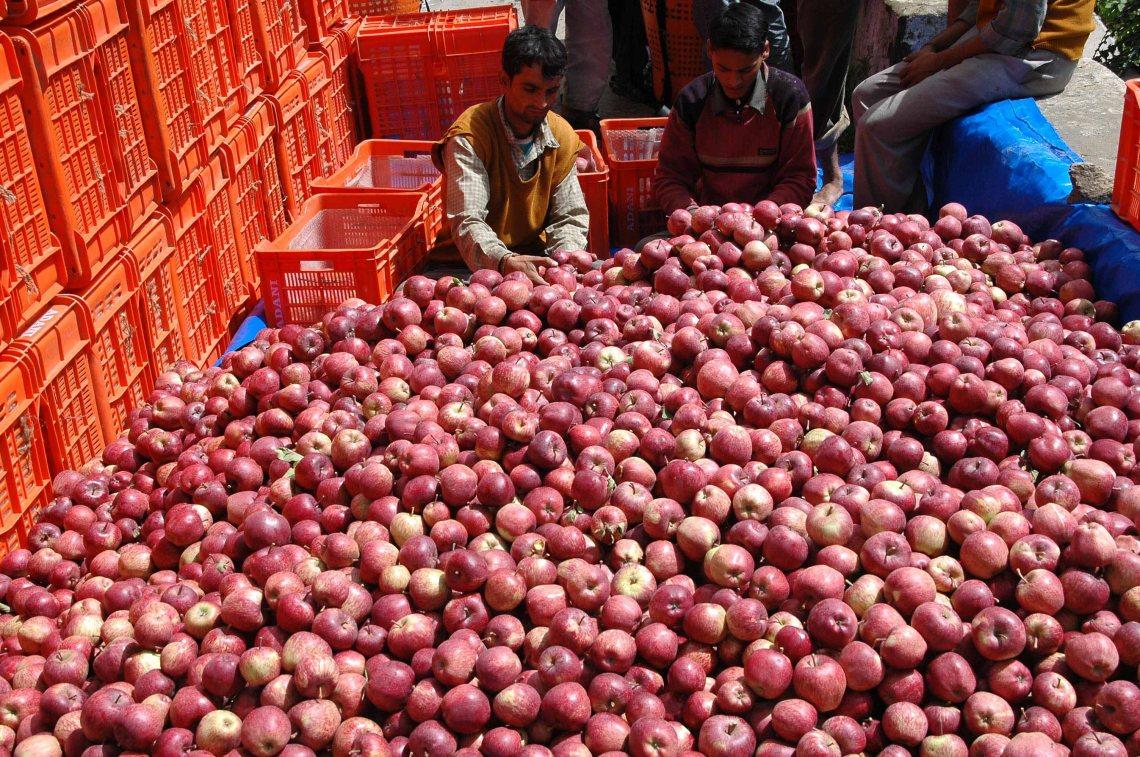The delicious Apples of Kairi, Shimla