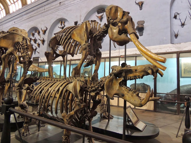 Inside the Suketi Fossil Park Museum