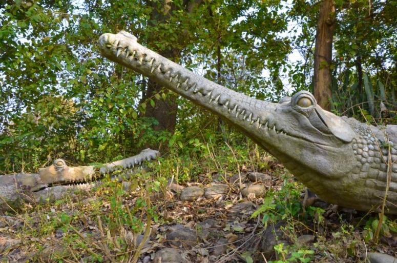 Shivalik Fossil Park is also known as Suketi Fossil Park