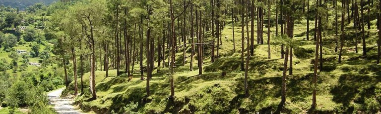 Lush Green Almora Valley