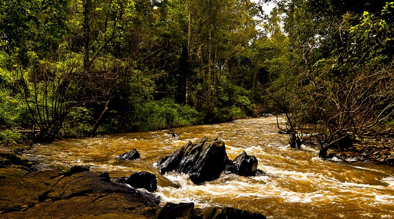 Water Stream flowing at Muthodi Reserve, Chikmagalur