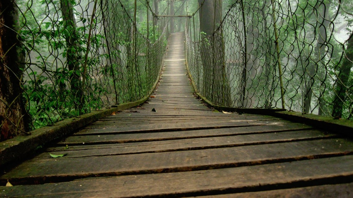 Loleygaon-canopy-walk